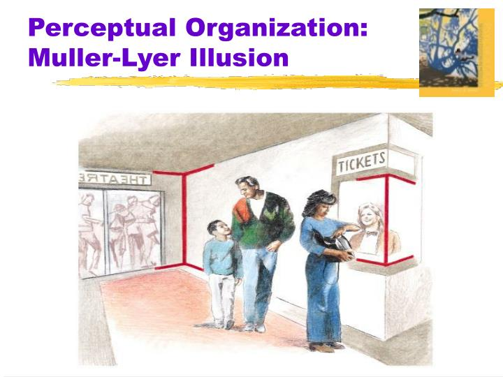 Perceptual Organization: Muller-Lyer Illusion