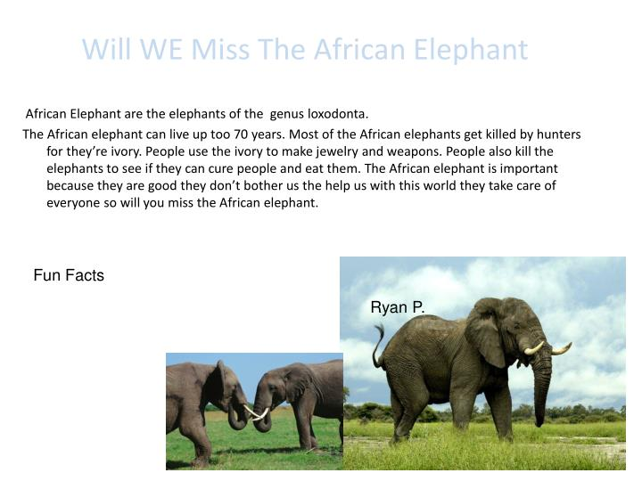 Will WE Miss The African Elephant
