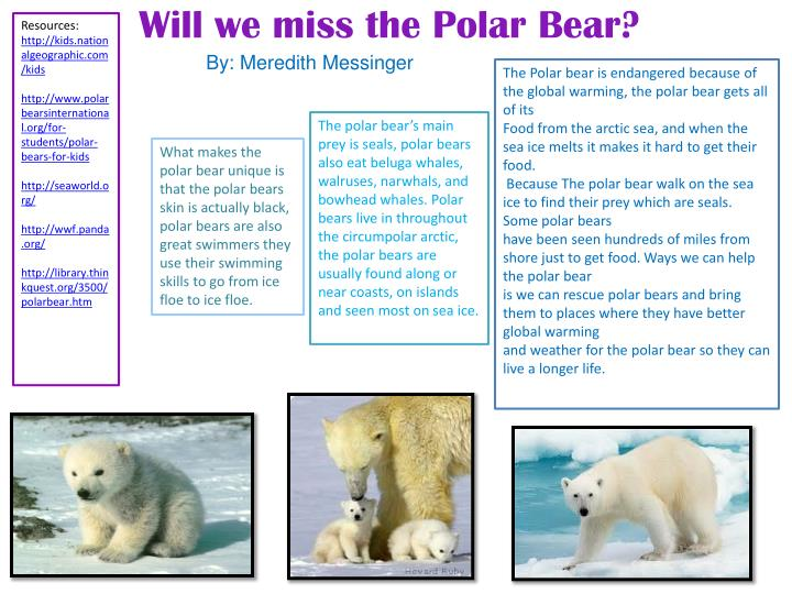 Will we miss the Polar Bear?