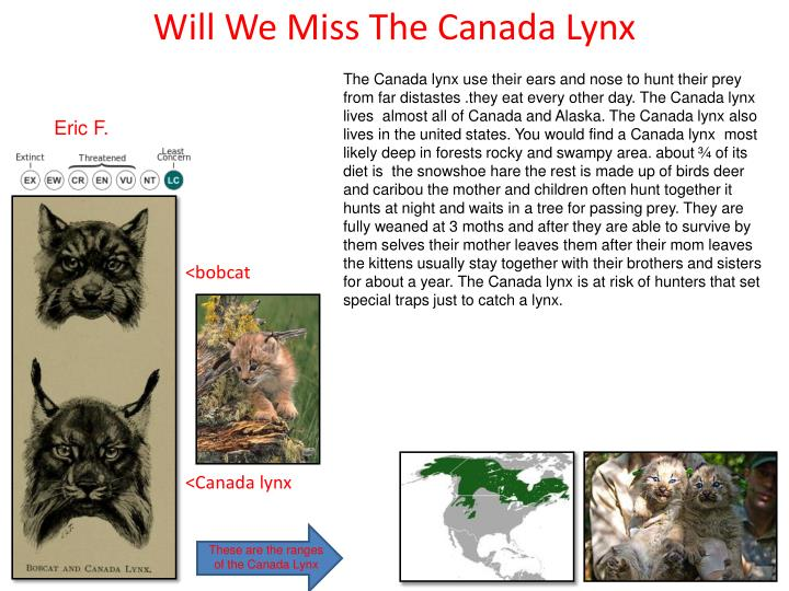 Will We Miss The Canada Lynx