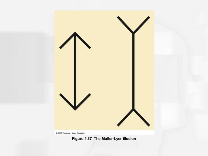 Figure 4.37  The Muller-Lyer illusion