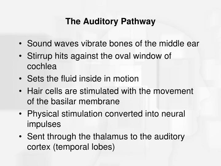 The Auditory Pathway