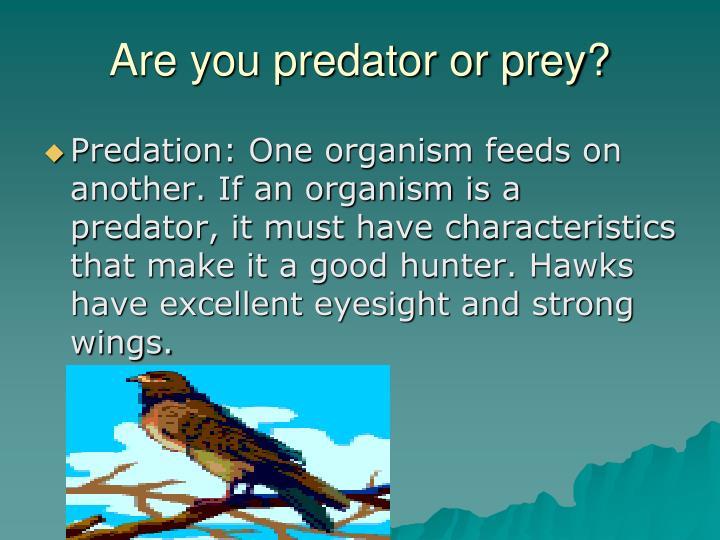 Are you predator or prey?