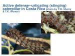 active defense urticating stinging caterpillar in costa rica photo by t w sherry t k werner