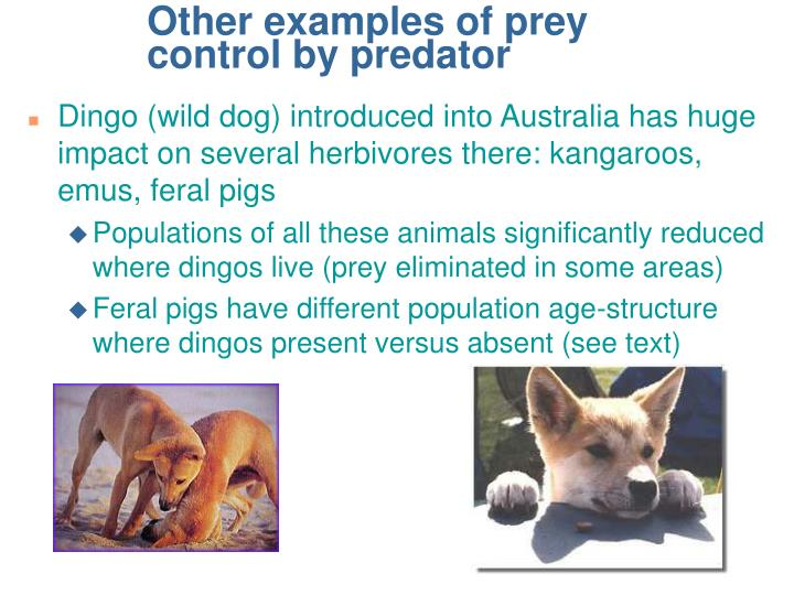 Other examples of prey control by predator