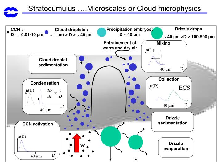 Stratocumulus ….Microscales or Cloud microphysics