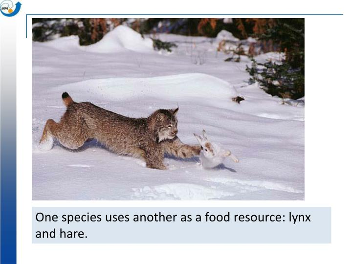 One species uses another as a food resource: lynx and hare.