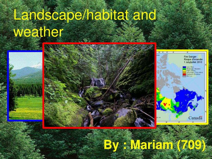Landscape/habitat and weather