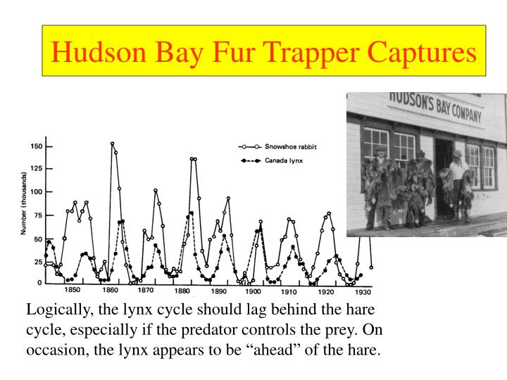 Hudson Bay Fur Trapper Captures