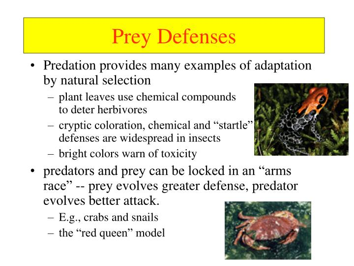Prey Defenses