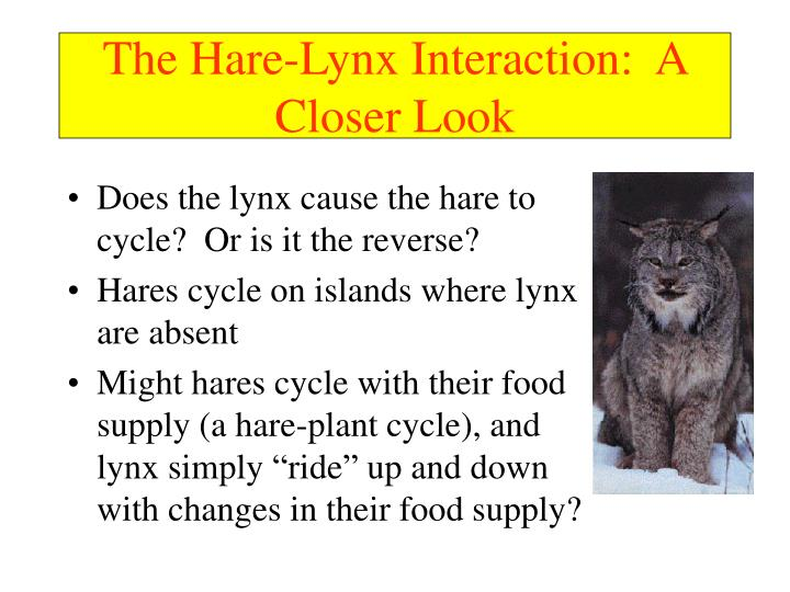 The Hare-Lynx Interaction:  A Closer Look