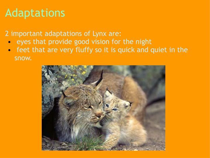 Adaptations