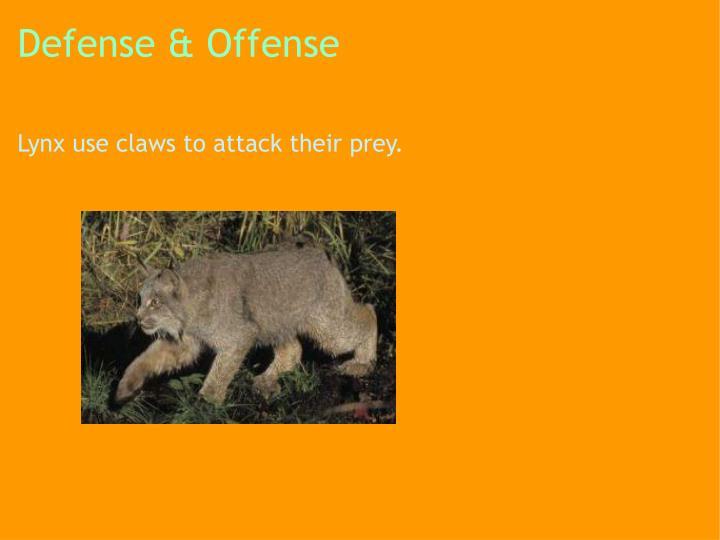 Defense & Offense