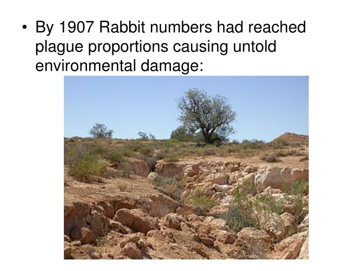 By 1907 Rabbit numbers had reached plague proportions causing untold environmental damage: