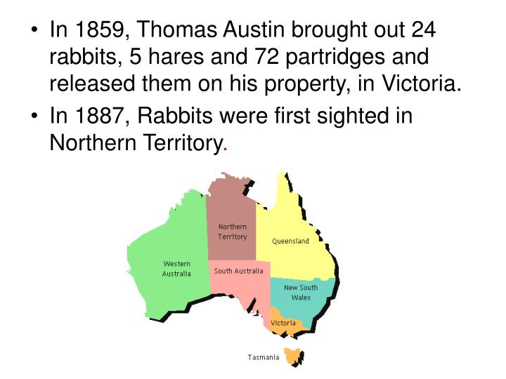 In 1859, Thomas Austin brought out 24 rabbits, 5 hares and 72 partridges and released them on his property, in Victoria.