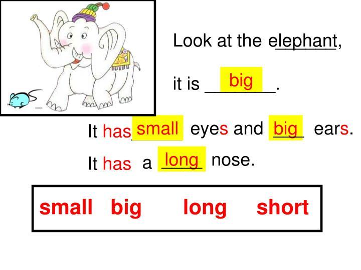 small   big       long     short