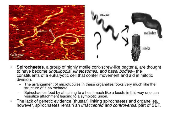 Spirochaetes
