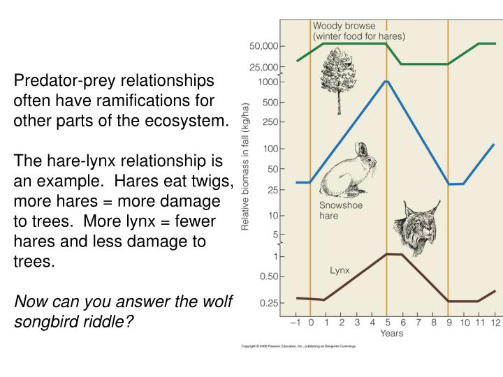 Predator-prey relationships often have ramifications for other parts of the ecosystem.