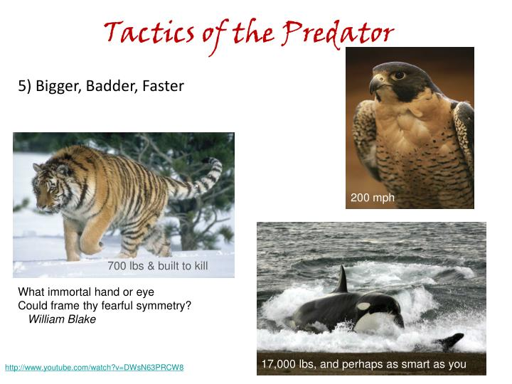 Tactics of the Predator