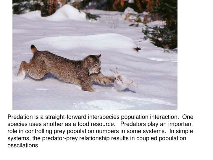 Predation is a straight-forward interspecies population interaction.  One species uses another as a food resource.   Predators play an important role in controlling prey population numbers in some systems.  In simple systems, the predator-prey relationship results in coupled population osscilations