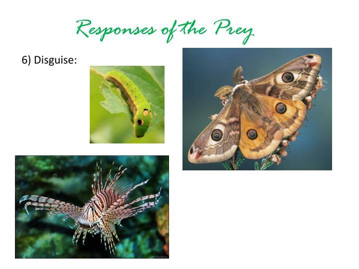 Responses of the Prey