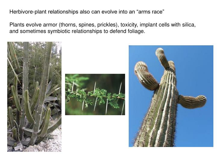 """Herbivore-plant relationships also can evolve into an """"arms race"""""""
