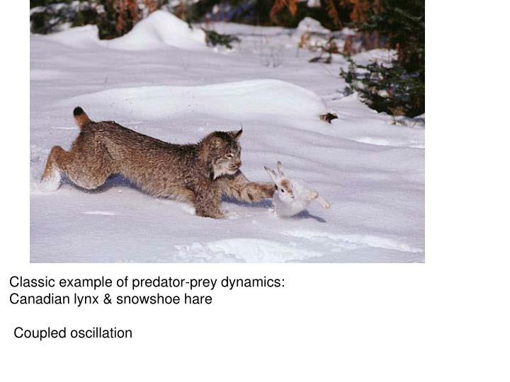 Classic example of predator-prey dynamics: