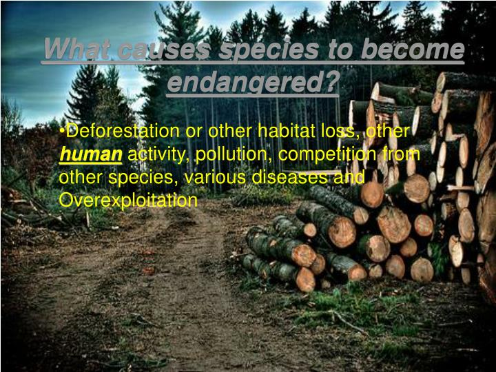 What causes species to become endangered
