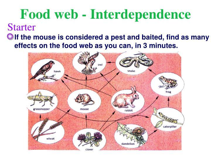 Food web - Interdependence