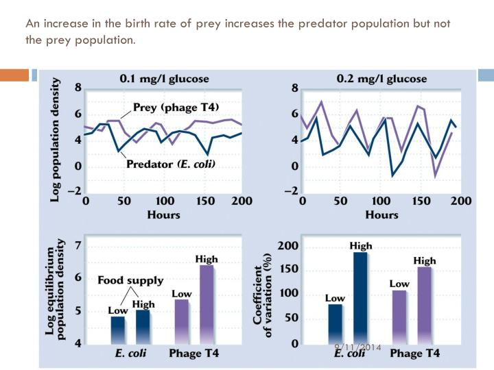 An increase in the birth rate of prey increases the predator population but not the prey population