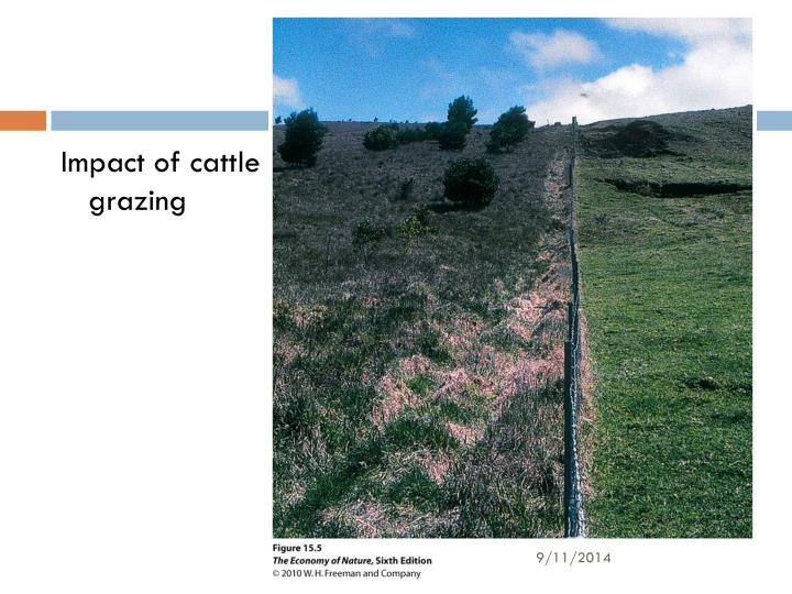 Impact of cattle grazing