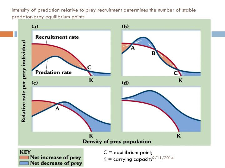 Intensity of predation relative to prey recruitment determines the number of stable predator-prey equilibrium points