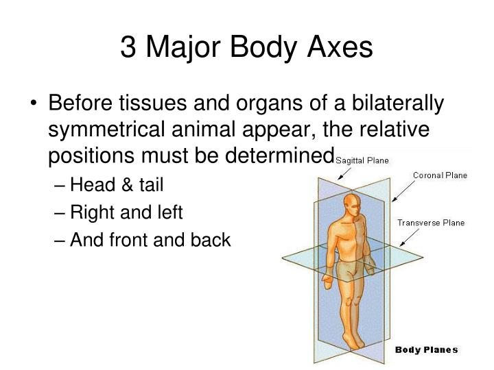 3 Major Body Axes