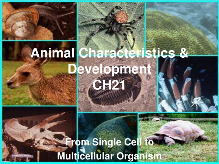 Animal characteristics development ch21