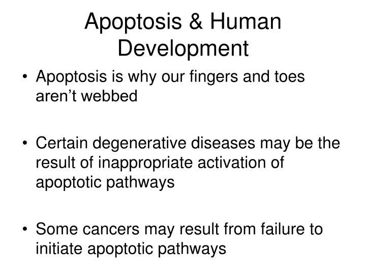 Apoptosis & Human Development