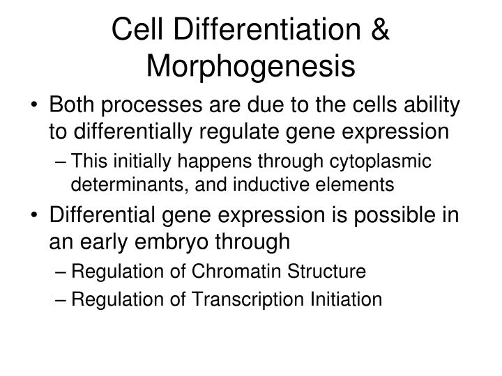 Cell Differentiation & Morphogenesis