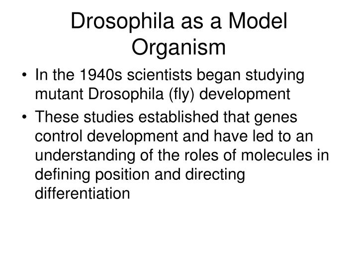 Drosophila as a Model Organism