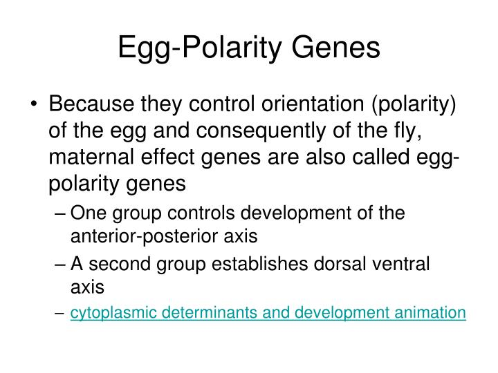 Egg-Polarity Genes