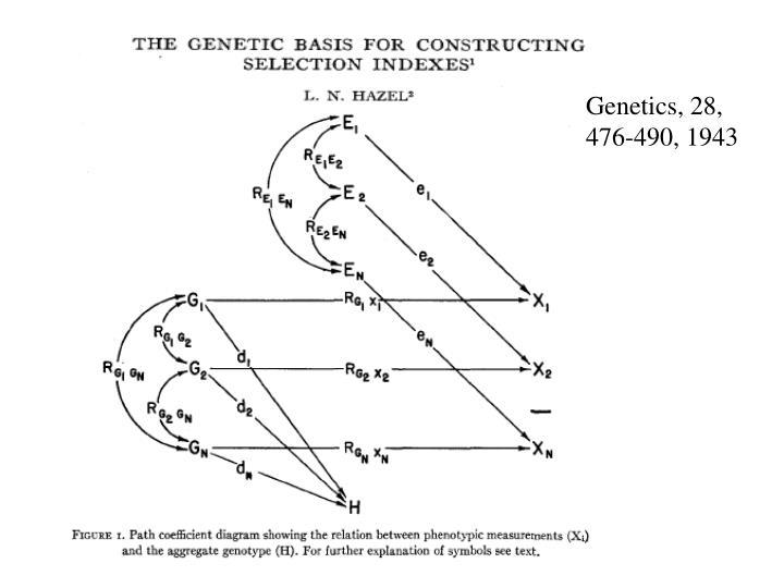 Genetics, 28, 476-490, 1943