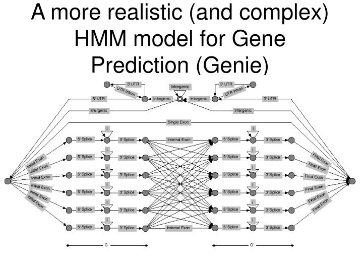 A more realistic (and complex) HMM model for Gene Prediction (Genie)