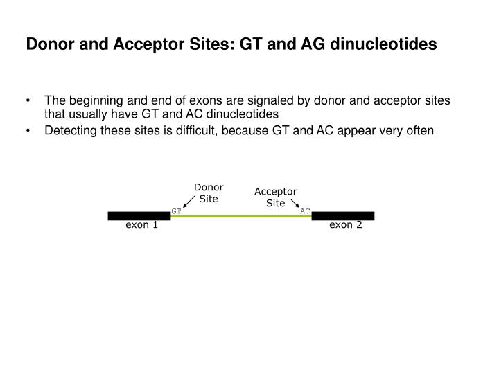 Donor and Acceptor Sites: GT and AG dinucleotides