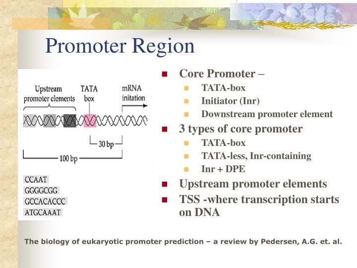 Promoter Region