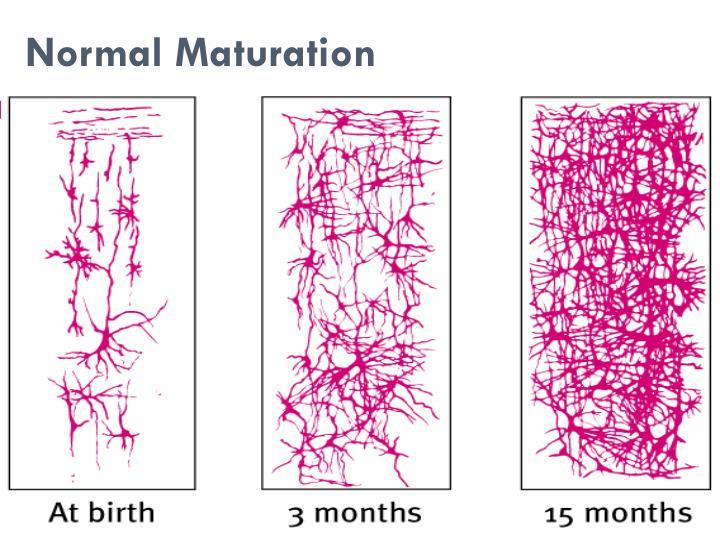 Normal Maturation