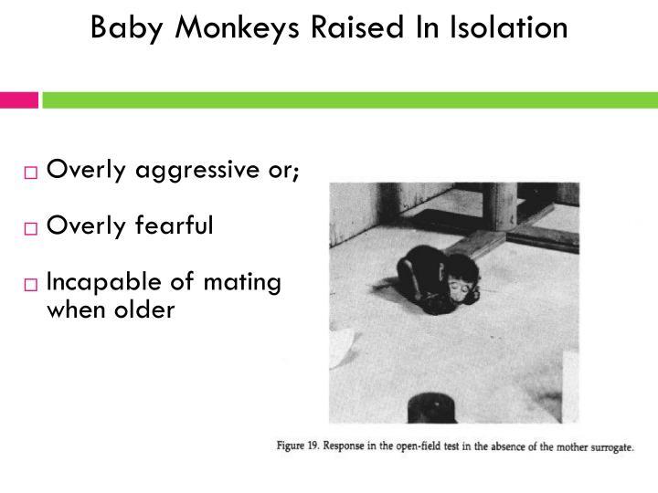 Baby Monkeys Raised In Isolation