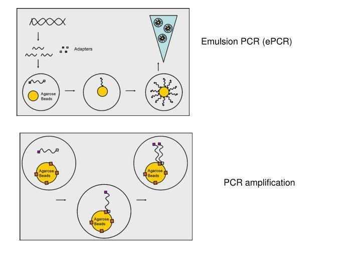 Emulsion PCR (ePCR)