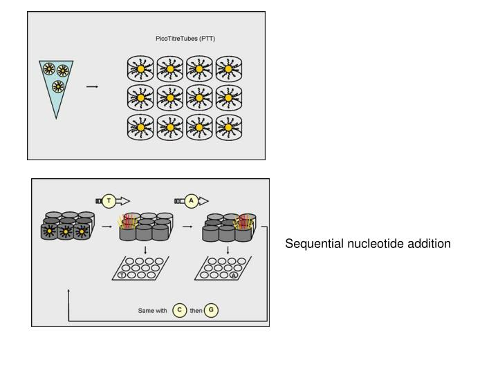 Sequential nucleotide addition
