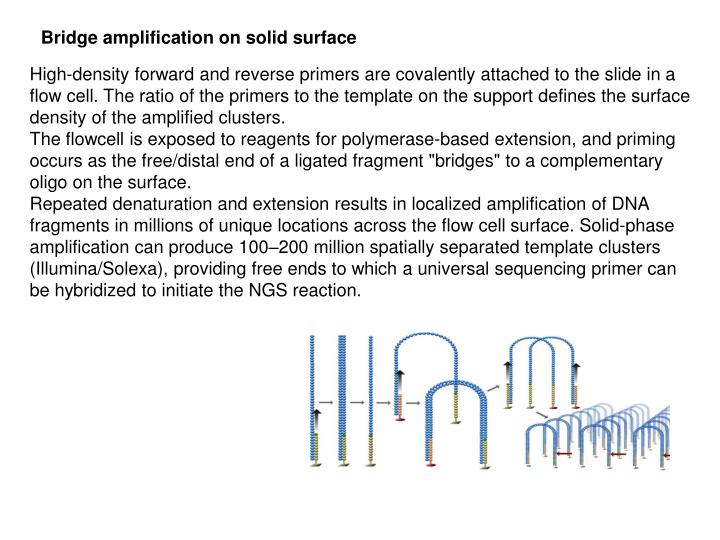 Bridge amplification on solid surface