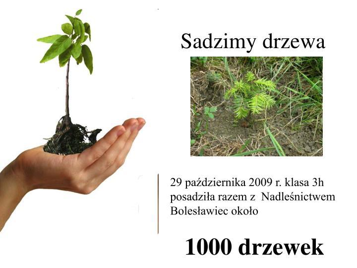 Sadzimy drzewa