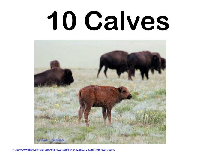 10 Calves