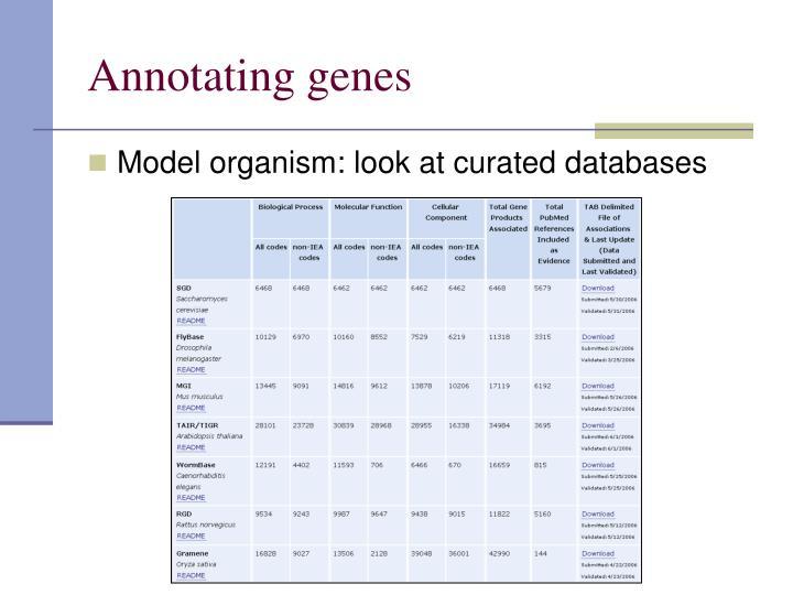 Annotating genes
